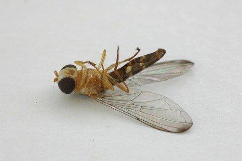Vodca: 4 utilizari turistice, excluzand betia insecta