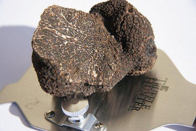 Lux culinar: trufele tasmaniene Perigord perigord truffle