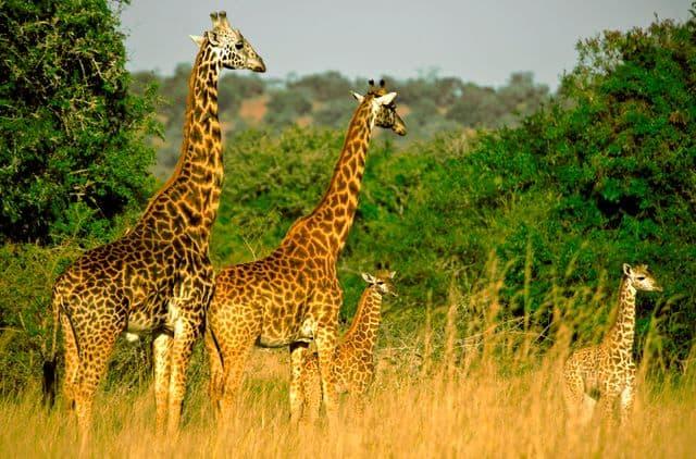 Top 5 tari africane perfecte pentru a admira viata salbatica akagera