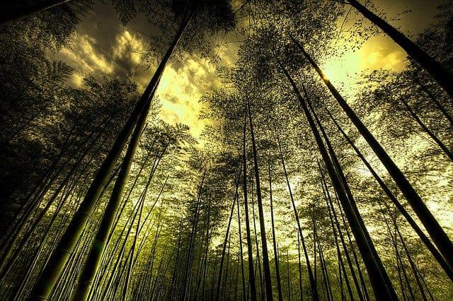 Top 10 locuri in care s-au filmat pelicule celebre (2) anji bamboo