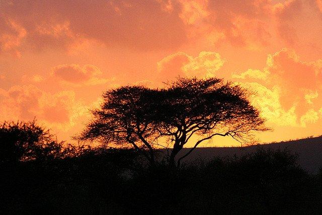 Top 5 tari africane perfecte pentru a admira viata salbatica kruger