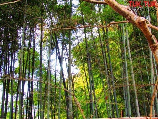 Kyoto: Ginkakuji - Pavilionul de Argint si Kinkakuji - Pavilionul de Aur IMG 2035