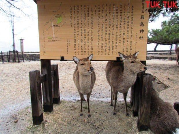 Miyajima, o insula romantica IMG 2721