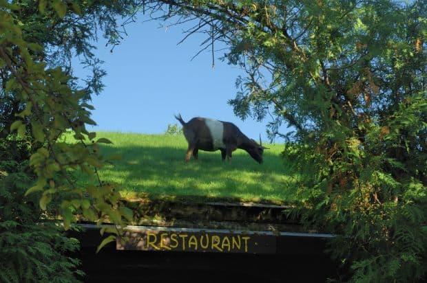 Cele mai ciudate restaurante din lume capre pe acoperis