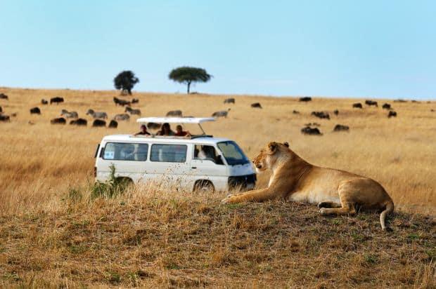 Kenya, optiunea perfecta pentru safari masai mara