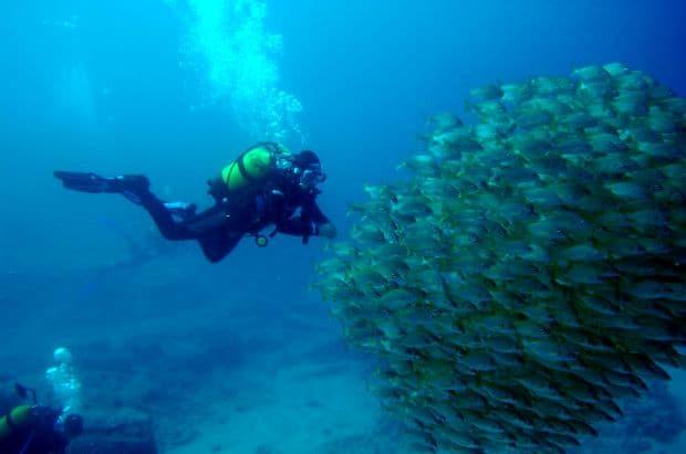 Vacanta in Tenerife diving tenerife