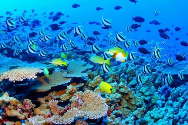 Top 10 locuri ideale pentru snorkeling marea bariera
