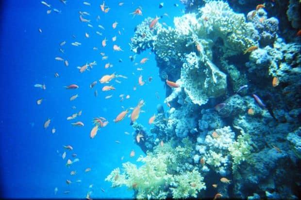 Top 10 locuri ideale pentru snorkeling red sea