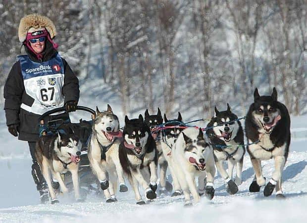 Alt gen de vacante de iarna husky