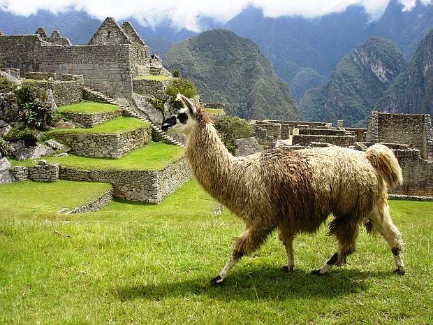 Opt circuite turistice pentru cei care nu iubesc turismul lama