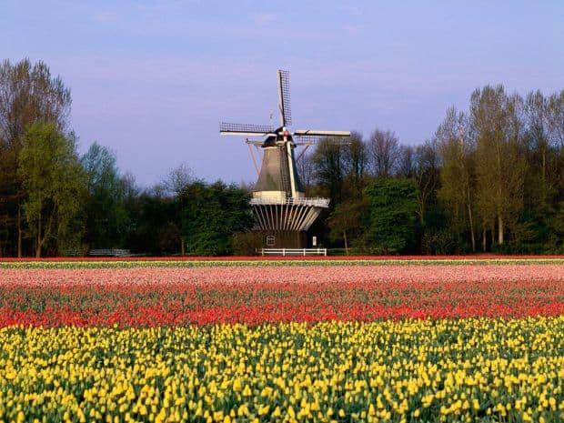 Olanda: cinci locuri pe care sa nu le ratezi keukenhof