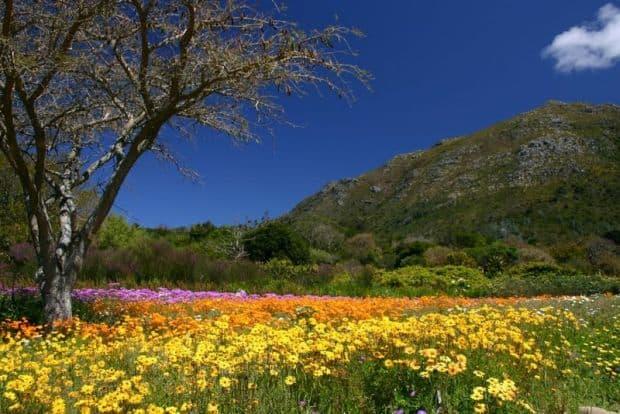 cape town Cape Town - ghid de calatorie Kirstenbosch