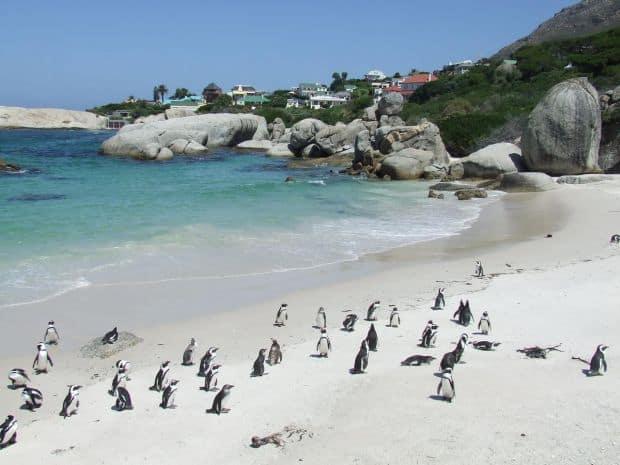 cape town Cape Town - ghid de calatorie boulders