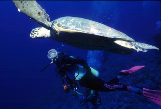 Sharm el-Sheik Sharm El Sheikh, destinația perfectă pentru scuba diving diving1