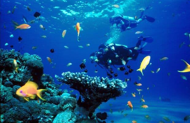 Sharm el-Sheik Sharm El Sheikh, destinația perfectă pentru scuba diving sharm2