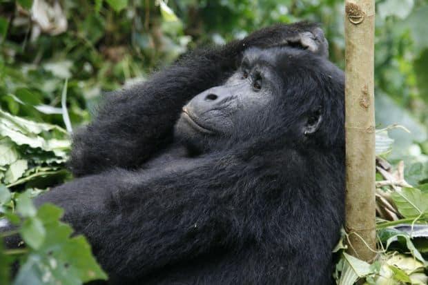 Sase destinatii de exceptie pentru iubitorii de animale Bwindi