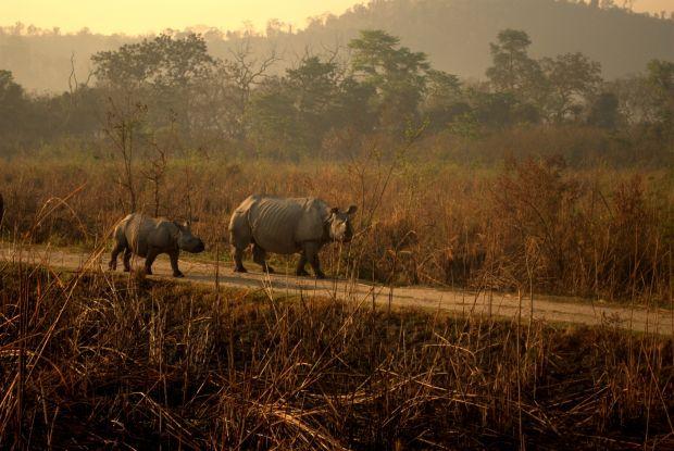 Sase destinatii de exceptie pentru iubitorii de animale Kaziranga
