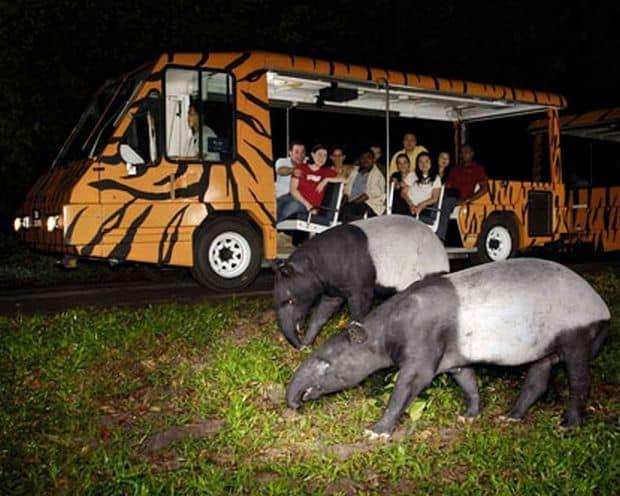 Sase destinatii de exceptie pentru iubitorii de animale safari singapore