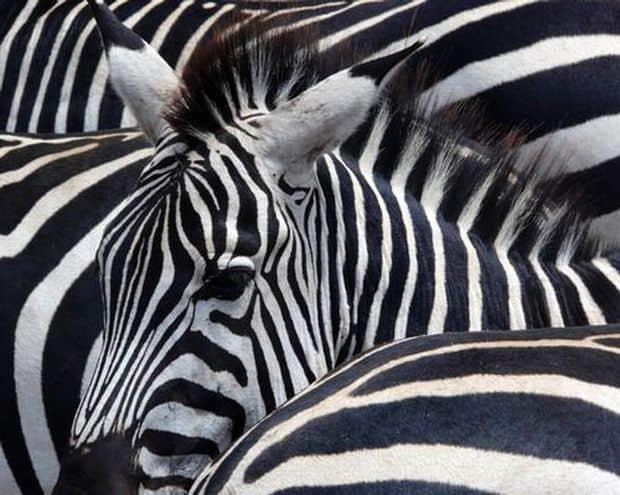 (P) Periplu prin Tanzania, la safari, si in Zanzibar, cu 1001 Adventures! UNESCO ngo