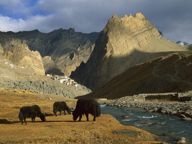 india 5 lucruri de stiut pentru prima vizita in India ladakh