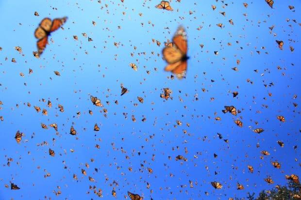 10 motive pentru a calatori in luna decembrie monarch