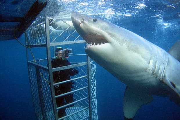 """Pentru """"aventuri"""" cu rechini, mergi in Australia"""