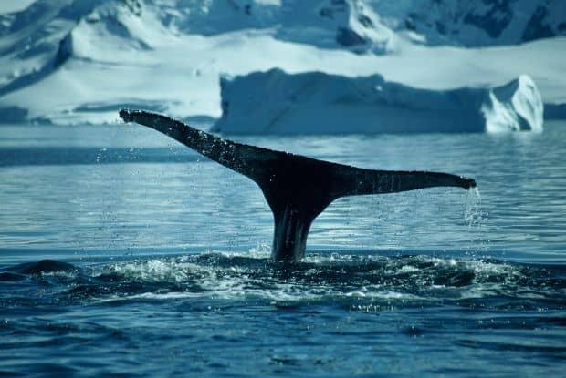 Antarctica - ultima frontiera