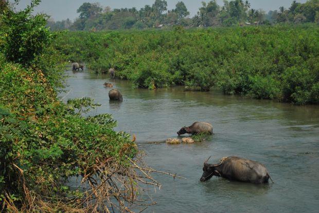 Pacea fluviului Mekong, in drum spre Si Phan Don  Top 10 aventuri in Laos Si Phan Don
