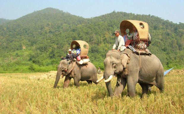 Cu elefantul la atac!  Top 10 aventuri in Laos mahout