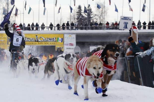 Cursa saniilor trase de caini Yukon Quest