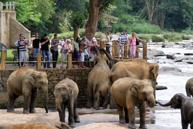 Rezervatia de elefanti Pinnewala