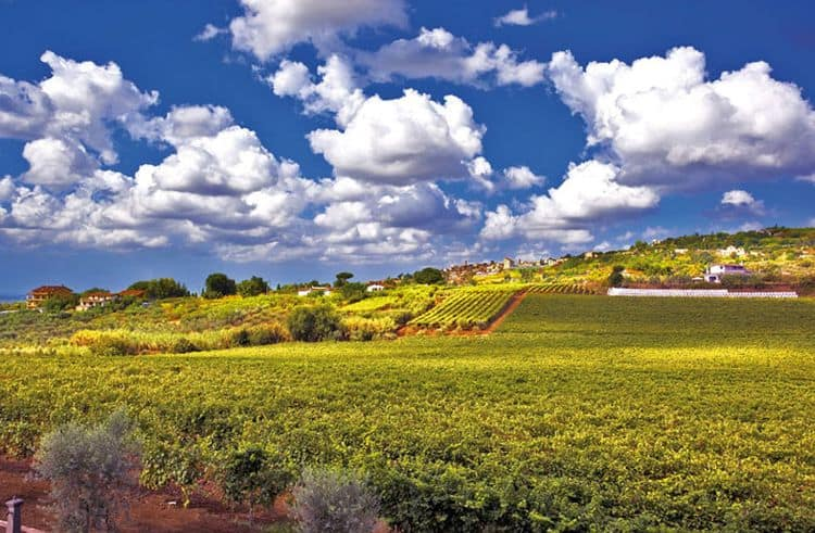 Podgoriile din Castelli Romani produc vinuri de clasa
