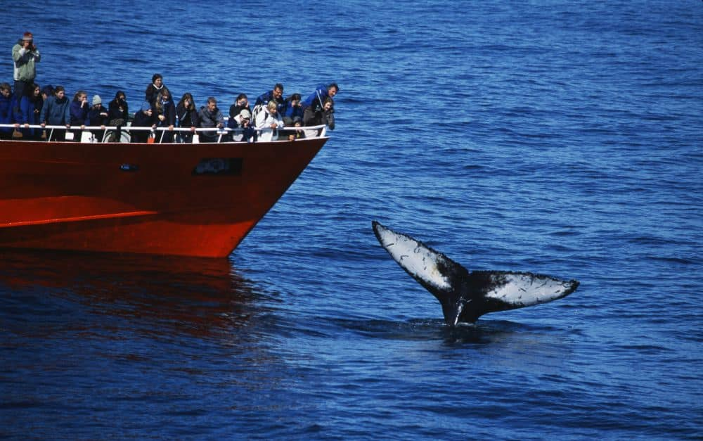 balene islanda Top 10 atracții turistice din Islanda balene
