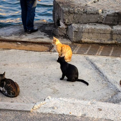 ist-pisici
