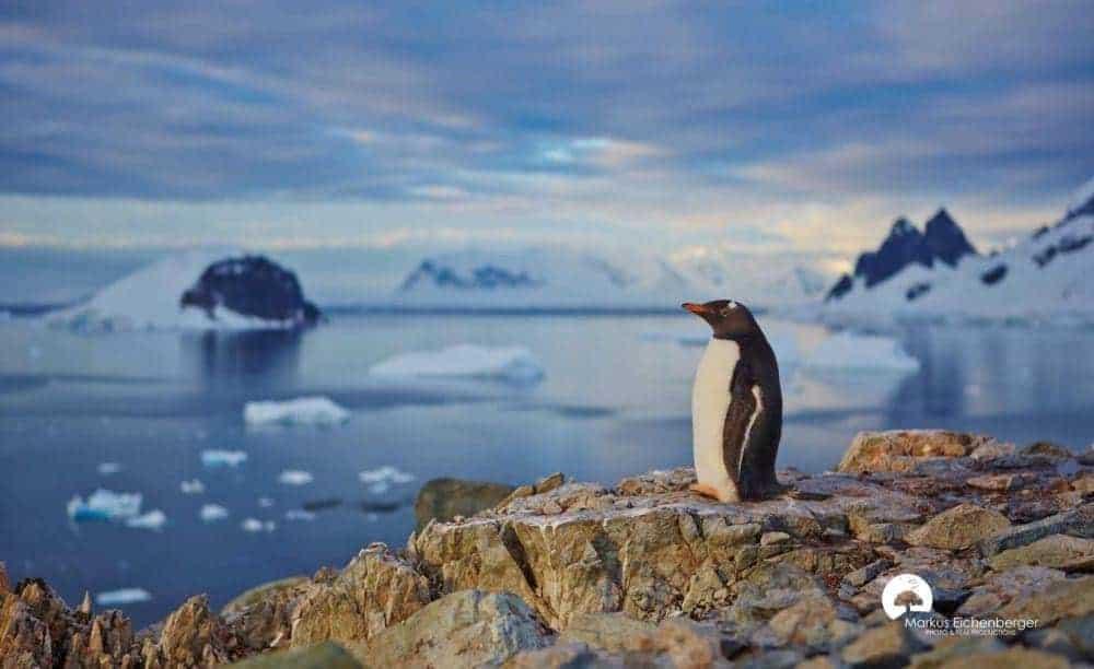 antarctica Antarctica: Exploratorii din trecut și turiștii de azi 01