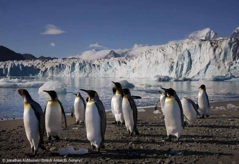 antarctica Antarctica: Exploratorii din trecut și turiștii de azi 1