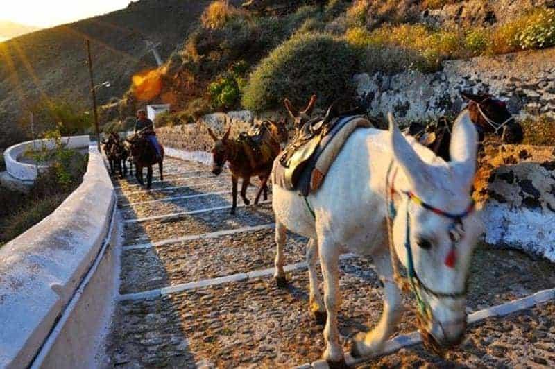 santorini vs mykonos Santorini sau Mykonos? Ce destinație ai alege pentru această vară? Magarus