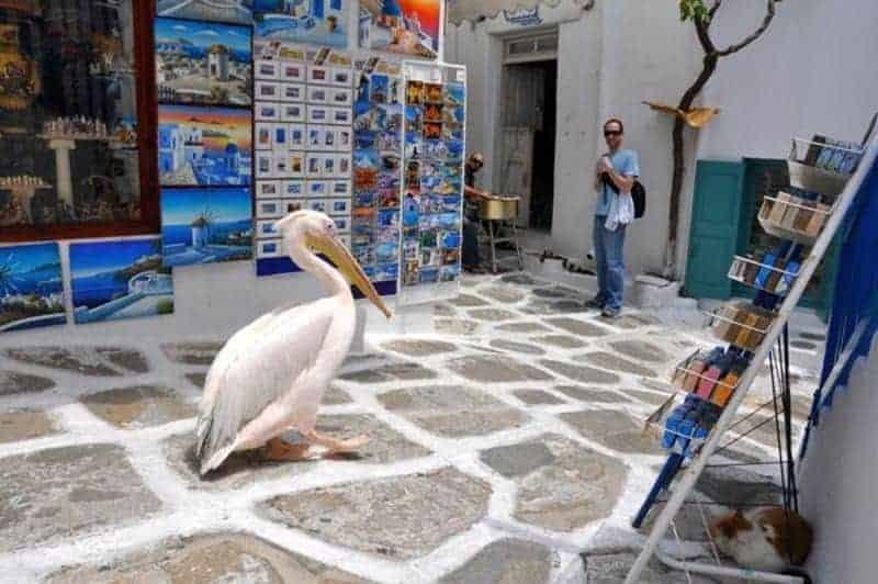 santorini vs mykonos Santorini sau Mykonos? Ce destinație ai alege pentru această vară? Pelican
