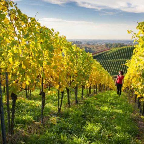 drumul vinului 4