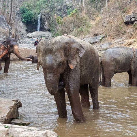 elefanti 8