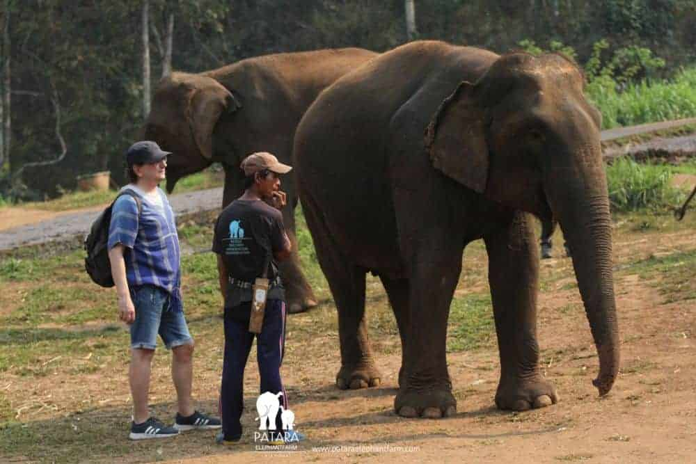 elefant patara