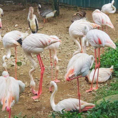 bird park kuala lumpur 10