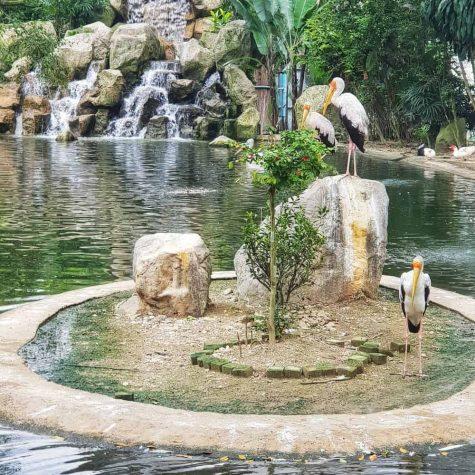 bird park kuala lumpur 11