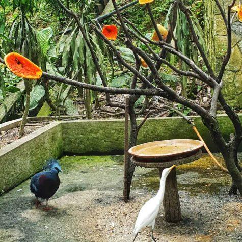 bird park kuala lumpur 12