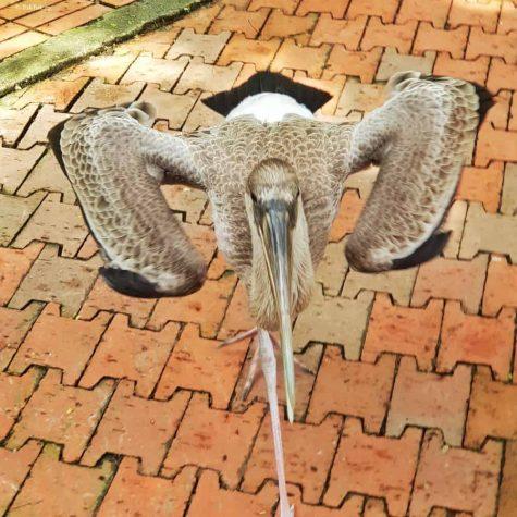bird park kuala lumpur 14