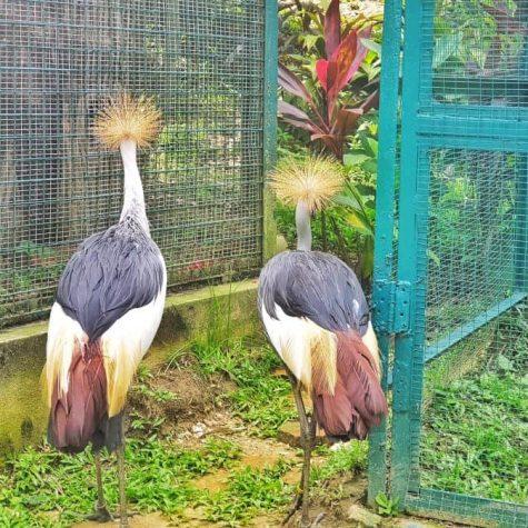 bird park kuala lumpur 5