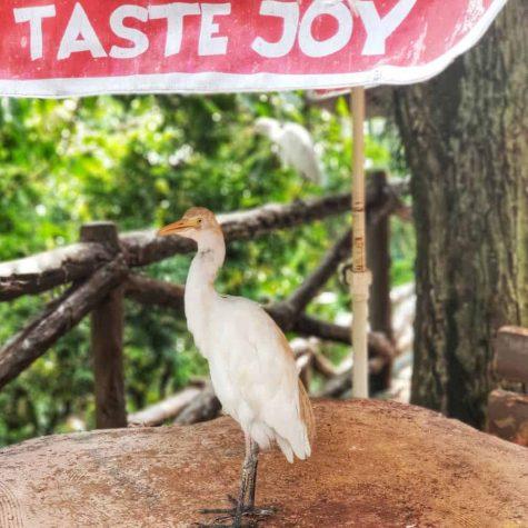 bird park kuala lumpur 7
