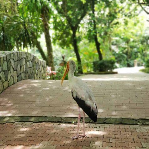 bird park kuala lumpur 8
