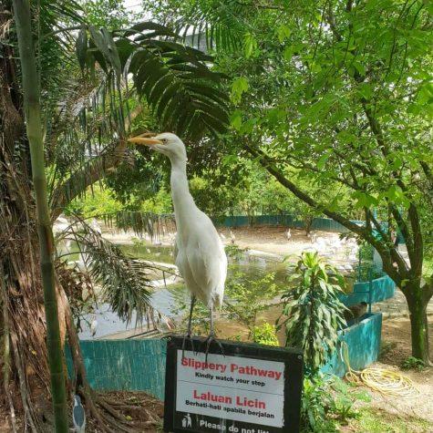 bird park kuala lumpur 9