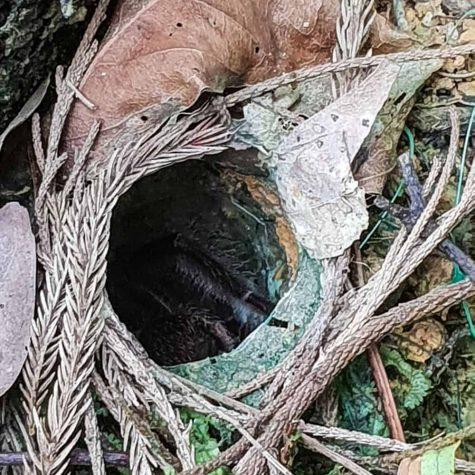 penang habitat 10